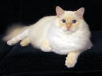 Coat (dog) - Wikipedia, the free encyclopedia
